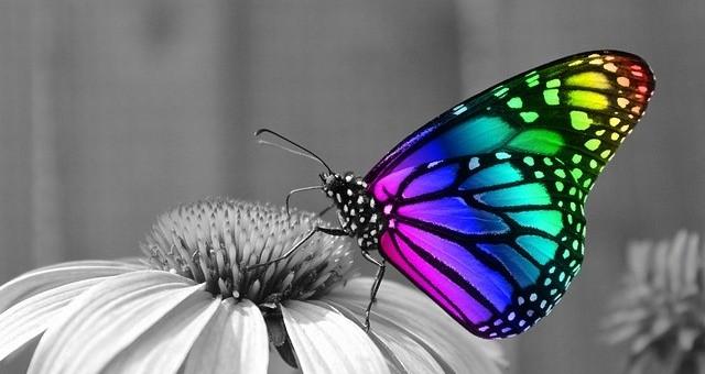 pretty butterfly on a flower
