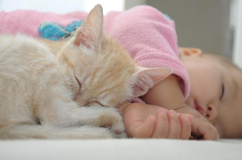 Kitten and baby